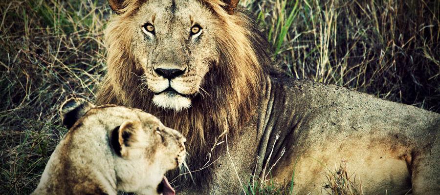 В животном мире долгий взгляд в упор сигнализирует об агрессии